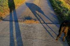 Pozdní odpoledne, na procházce s pánem